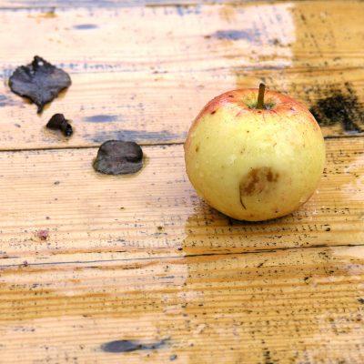 Bakken Appelkoeken
